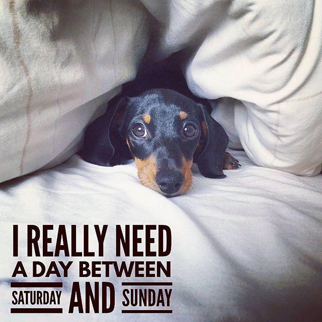Me too... . @martha_dachshund