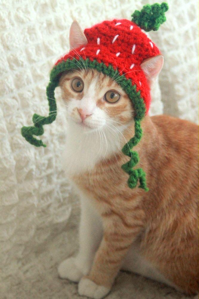 Strawberry Kitty D Crochet Dragon Cat Clothes Cat Hat