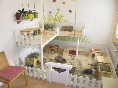 Sweet DIY cage for Guinea pigs :) hey Jenna and Mitch- You guys should build this!!!