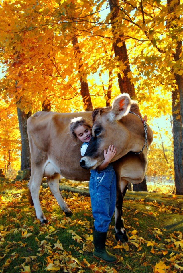 A cow and her girl bask in the golden fall sun...we can do this we all of our heifers they are more baby's/pets than anything