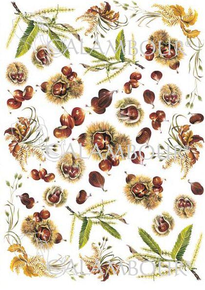 Pattern : #chestnuts with white background.