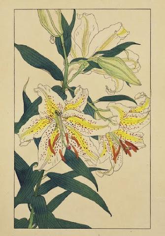 杉浦非水「非水百花譜」より「やまゆり」(1920~22年、木版、紙、47×32センチ、宇都宮美術館蔵)