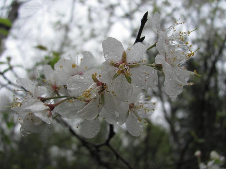 Raindrops, Pinawa, MB