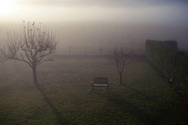 jardin brouillard