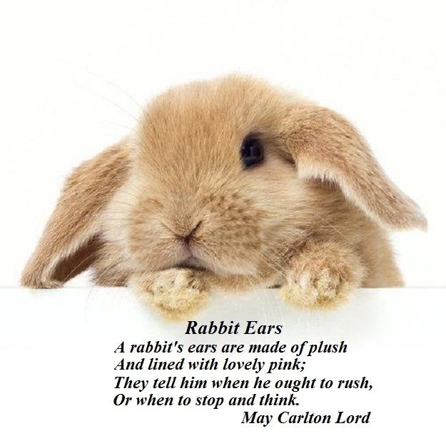 Quotes About Rabbits: 145 Best Images About Quotes Rabbits On Pinterest
