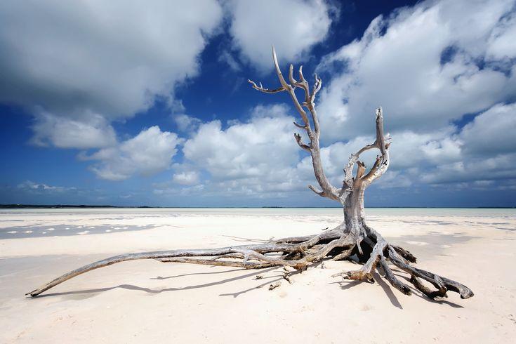Harbour Island tree