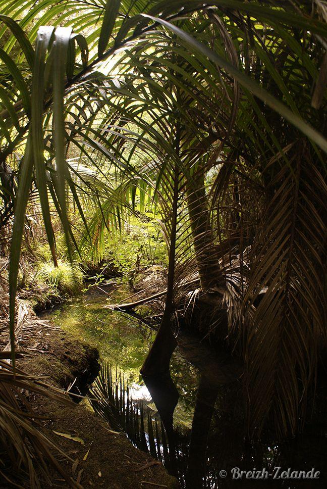 Forêt de Waiheke Island près d'Auckland #NZ #Ile #Nature