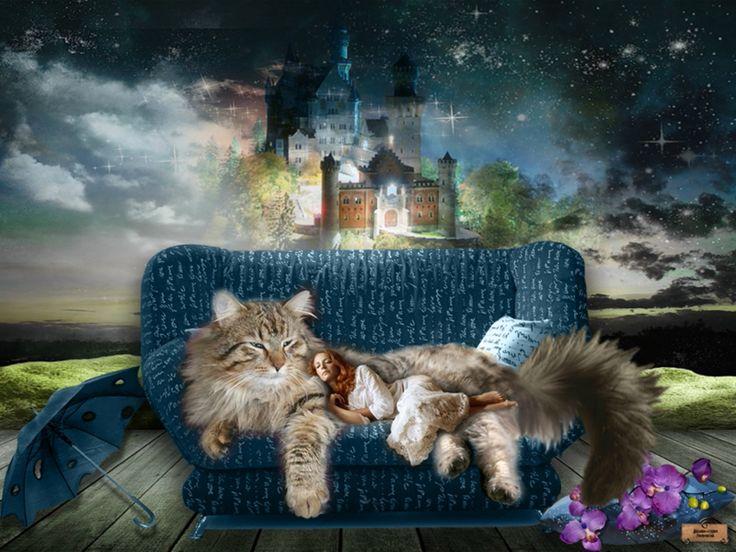 Обои для рабочего стола. Картинки с кошками. | Все для фотошопа. Фотошоп для всех