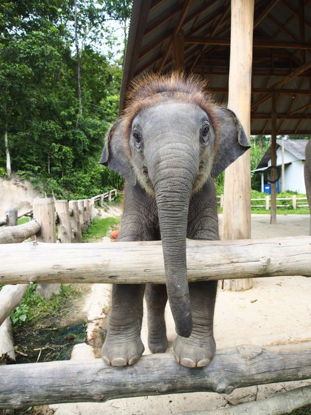 17 Best Images About Elephants Gentle Giants On