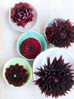 Dahlia met haar pronkstukken: de bloemblaadjes