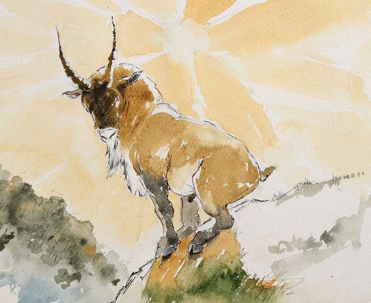 Goat. Watercolor, pen.