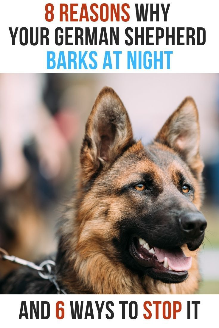 Why Your German Shepherd Barks Howls Or Whines At Night German Shepherd Barking German Shepherd German Shepherd Puppy Funny
