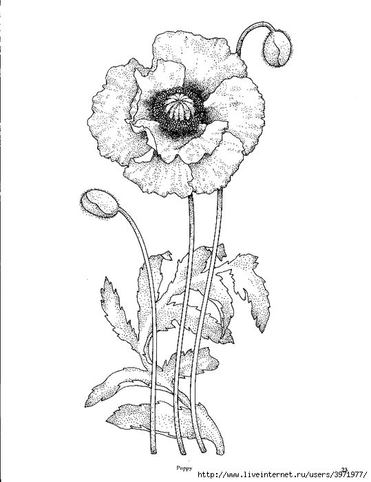 Pin by Trish Cusack on Pen/Ink Floral | Pinterest ...