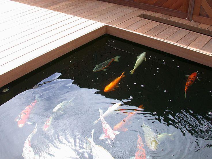 Les 55 meilleures images propos de bassin ext rieur for Bassin poisson terrasse