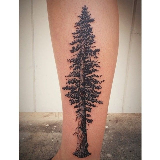 Redwood tree tattoo by James Tran - Full Circle Tattoo - San Diego, CA. #fullcircletattoo