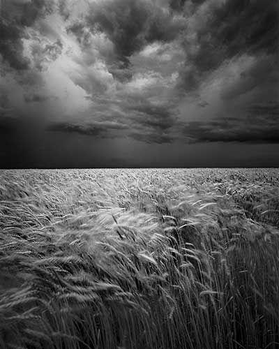 David Brookover Photography.  Black Kitty in the Wheatfield, Kansas