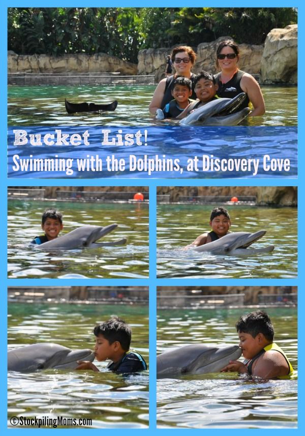 Bucket List - A Day of Paradise at Discovery Cove Swimming with the Dolphins in Orlando, FL (Stockpiling Moms Full Review)