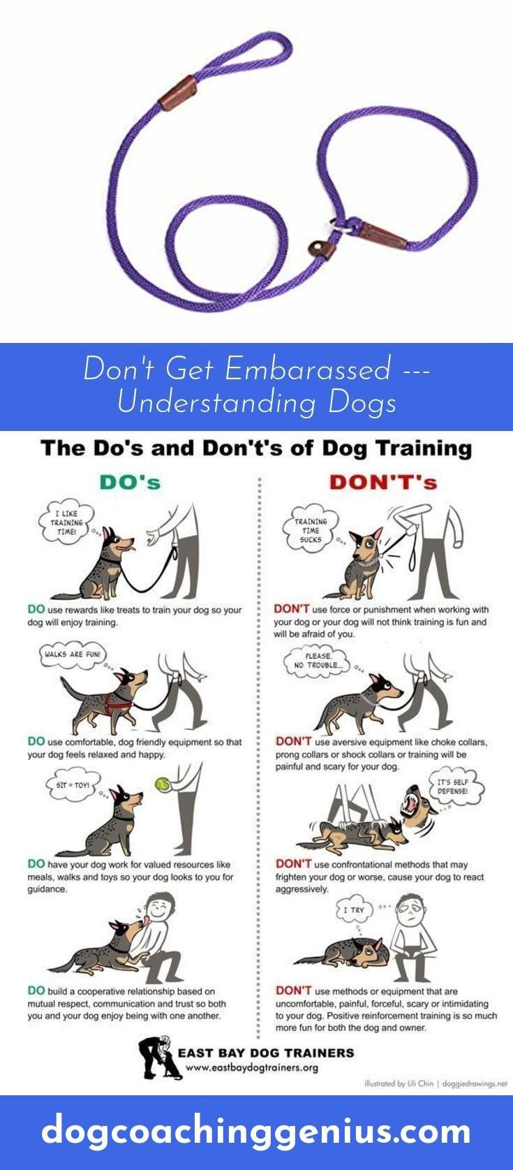 Read About Dog Leash Training Dog Leash Training Leash Training
