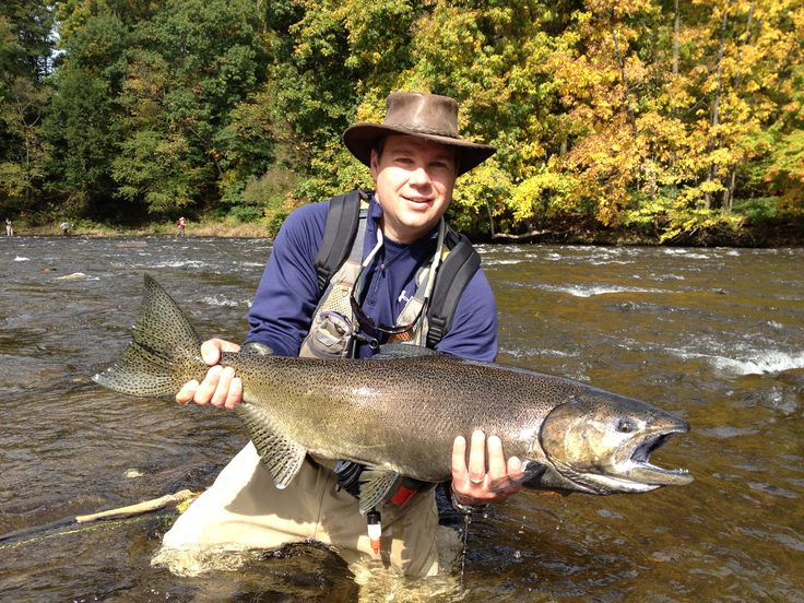1000 images about salmon river new york on pinterest for York river fishing report