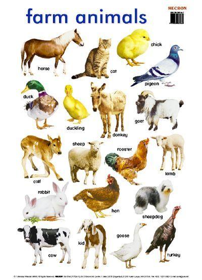 farm animals names - Cerca con Google