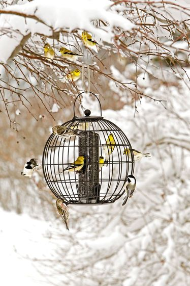 To keep the bullying blue jays and red winged black birds away! Mixed Seed Globe Cage Feeder