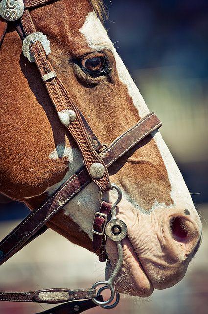 hmmmmmBarrel Racing, Baby Horses, Westerns Quarter, Quarter Painting, Quarter Horses, Paint Horses, Horses Appaloosa, Painting Horses, Pinto Horses