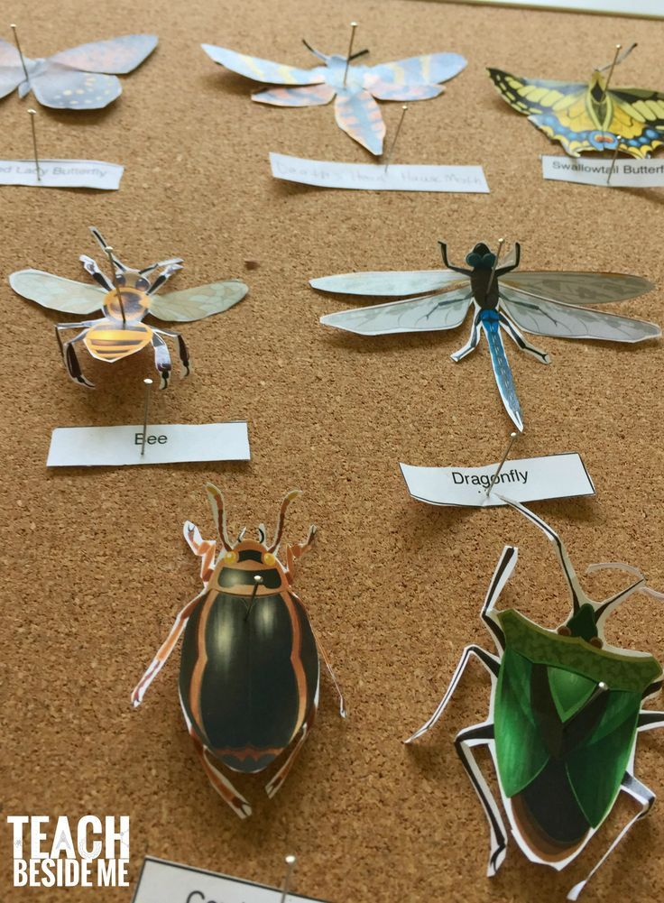 Printable paper insect display- nature science  via @karyntripp