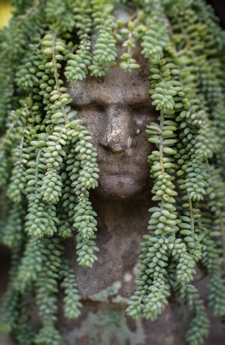 323 best container garden ideas images on pinterest container plants backyard patio and - Medusa head planter ...