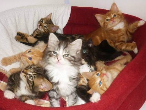 Catcuddles Sanctuary The famous eight (kittens) Cats