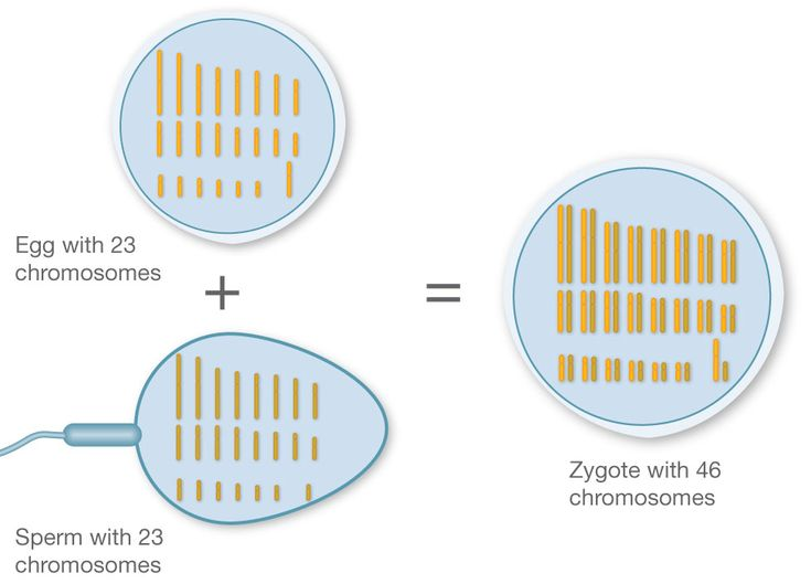dna reproductive process Reproduction: reproduction, process by which organisms replicate themselves   in 1953 it was established that dna molecules consist of two complementary.