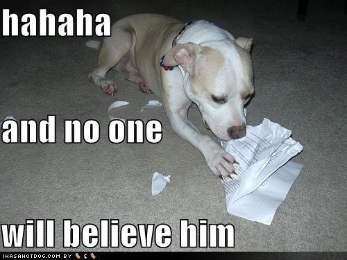 Dog eating homework funny definition