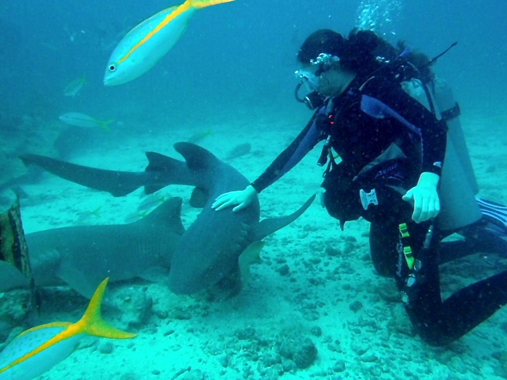 """Swim with the sharks preferably of the non """"Jaws"""" variety"""