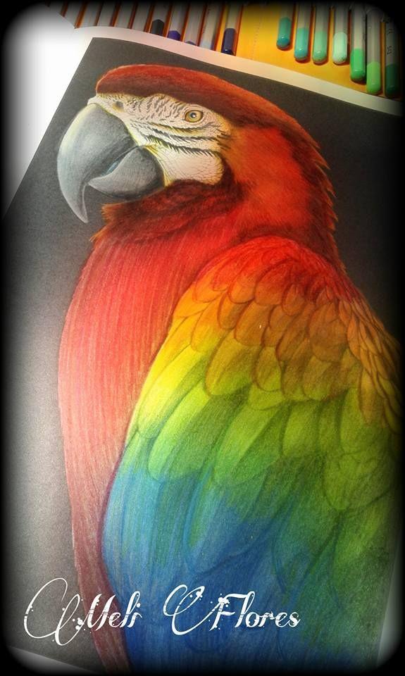 Macaw 2 Page 28 By Mel F