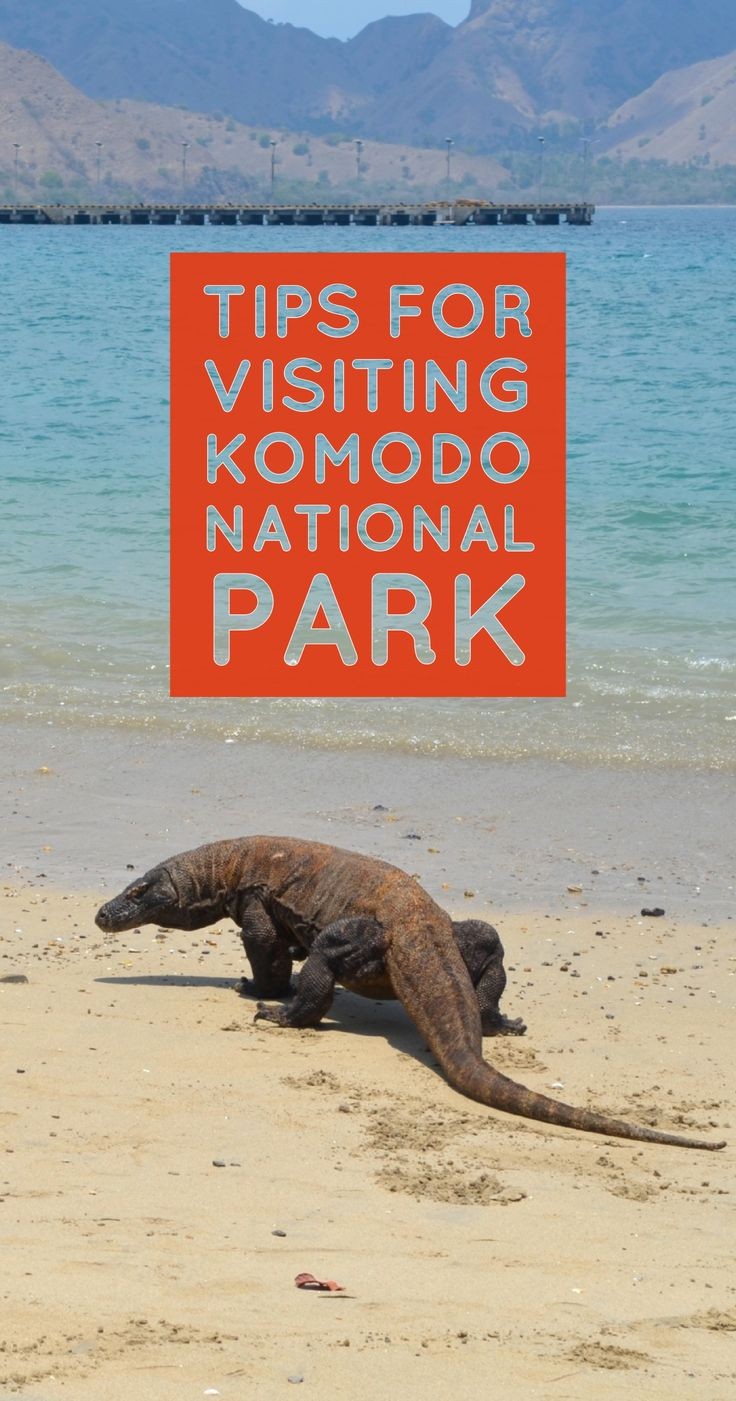 The best tips for safely visiting the Komodo National Park, islands and the Komodo Dragons in Indonesia.