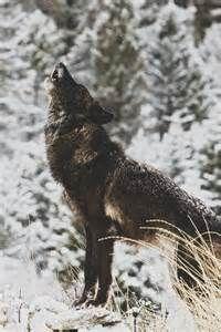 vertical winter scenes - Bing Images