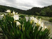 Cahaba River - Flat Water Paddling
