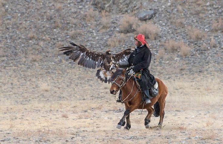 """""""The relationship between the eagle and hunter only lasts for six to eight years"""""""
