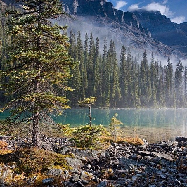 Photo by @peteressick - Location: Lake O'Hara, Yoho National Park, Canada #thetrickytree