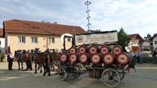 Drachselsried Falterbraü horses