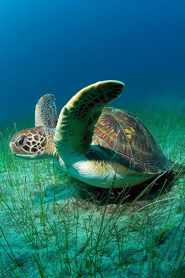 Sea Turtles are Awesome ! !