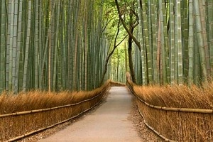 a path through bamboo: Idea, Favorite Places, Wall Murals, Bamboo Grove, Bamboo Forest, Travel, Garden, Kyoto Japan, Grove Wall