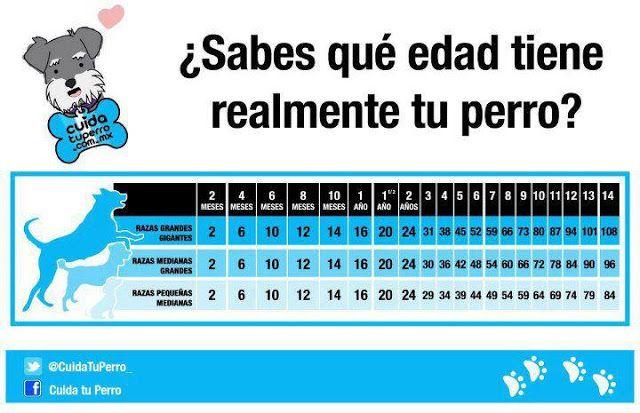 LOS ANIMALES SON PARTE DE ESTE MUNDO , NO VALEN MENOS QUE NOSOTROS!!!: CUANTOS AÑOS TIENE TU PERRO?