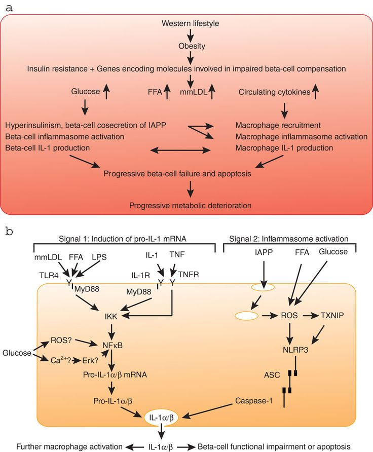 Pathophysiology Diabetes Mellitus Type 2 *** Click on the image for additional details.