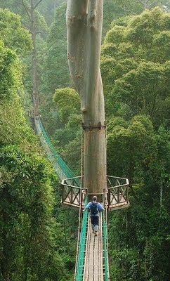 See the picz: Borneo Rainforest Canopy Walkway | See more