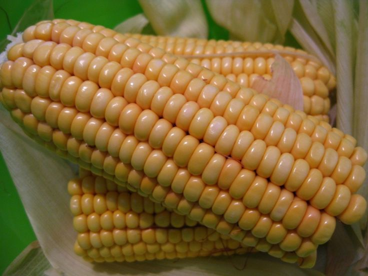 #Maize A potential source of human #Nutrition and #Health: A review https://adalidda.net/posts/K2Nnejh8jiaupXJ8H/maize-a-potential-source-of-human-nutrition-and-health-a
