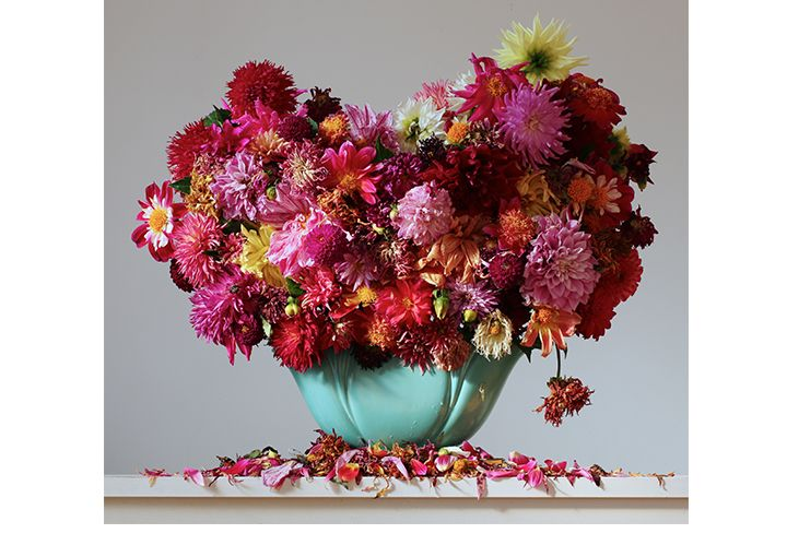 Dahlias by New Zealand photographer Emma Bass