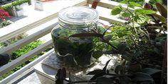 ΛΙΚΕΡ ΜΑΣΤΙΧΑ - ΣΥΝΤΑΓΗ - Μαστίχα ονομάζεται η αρωματική φυσική ρητίνη που εξάγεται από το μαστιχόδεντρο (Πιστακιά η λεντίσκος ποικ. η Χία), το οποίο ......