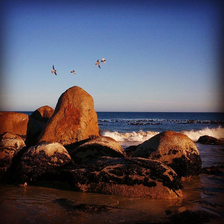 FOUR BIRDIES IN A ROW - I tried to get a snap of these birds all sitting together on the large boulder...typically the moment I shot they flew off ~ still looks pretty cool though :P   #westcoast #southafrica #beachlife #birds