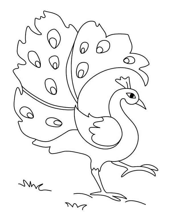 Peacock Simple Drawing of Green