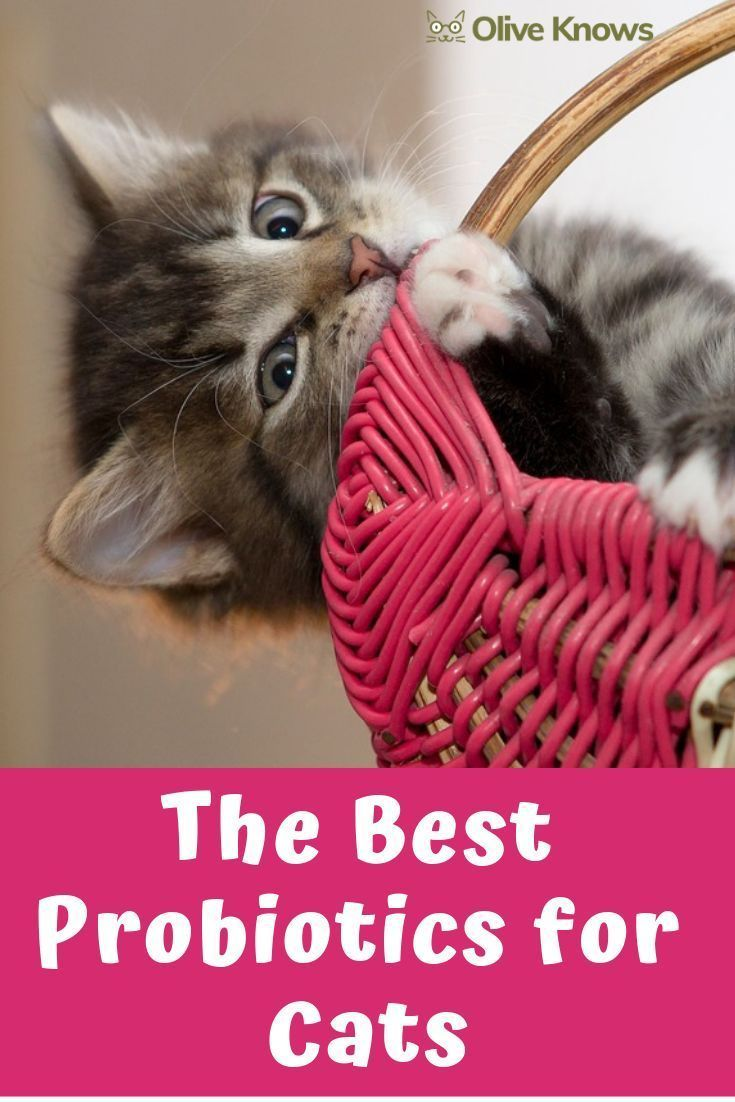 The Best Probiotics For Cats Oliveknows Probiotics For Cats Cat Care Cat Probiotics